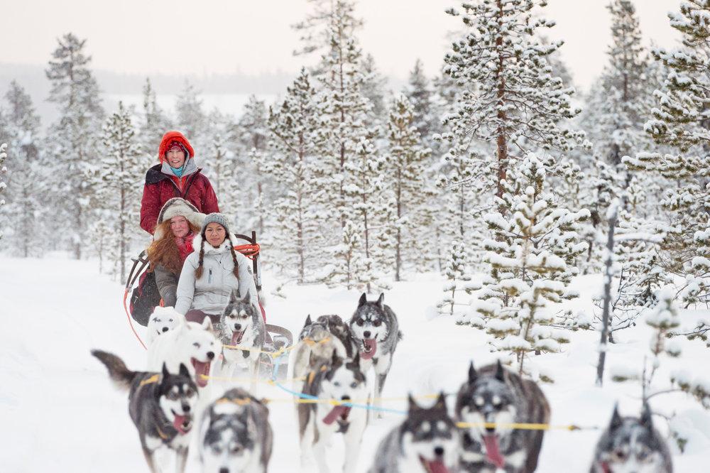 Copy of Dog sledding in Jokkmokk. Photo: Anna Öhlund/imagebank.sweden.se
