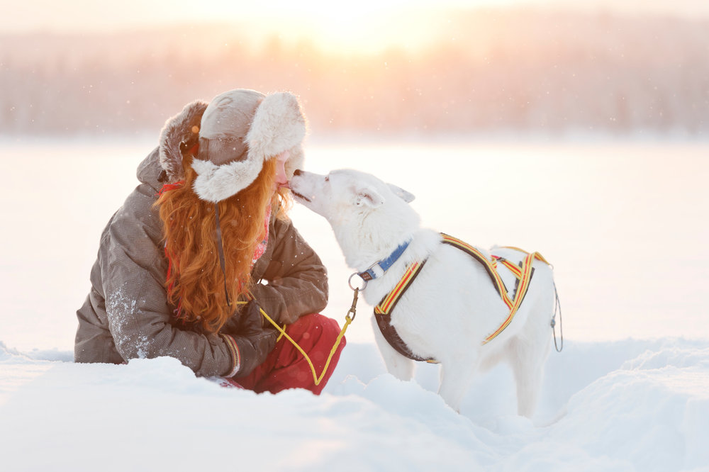 Copy of Husky love! Photo: Anna Öhlund/imagebank.sweden.se