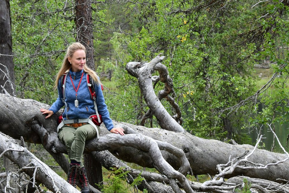 This is a recent picture of Helena in a fantastic forest in Leipipir between Gällivare and Nattavaara in the county of Norrbottens in Swedish Lapland.