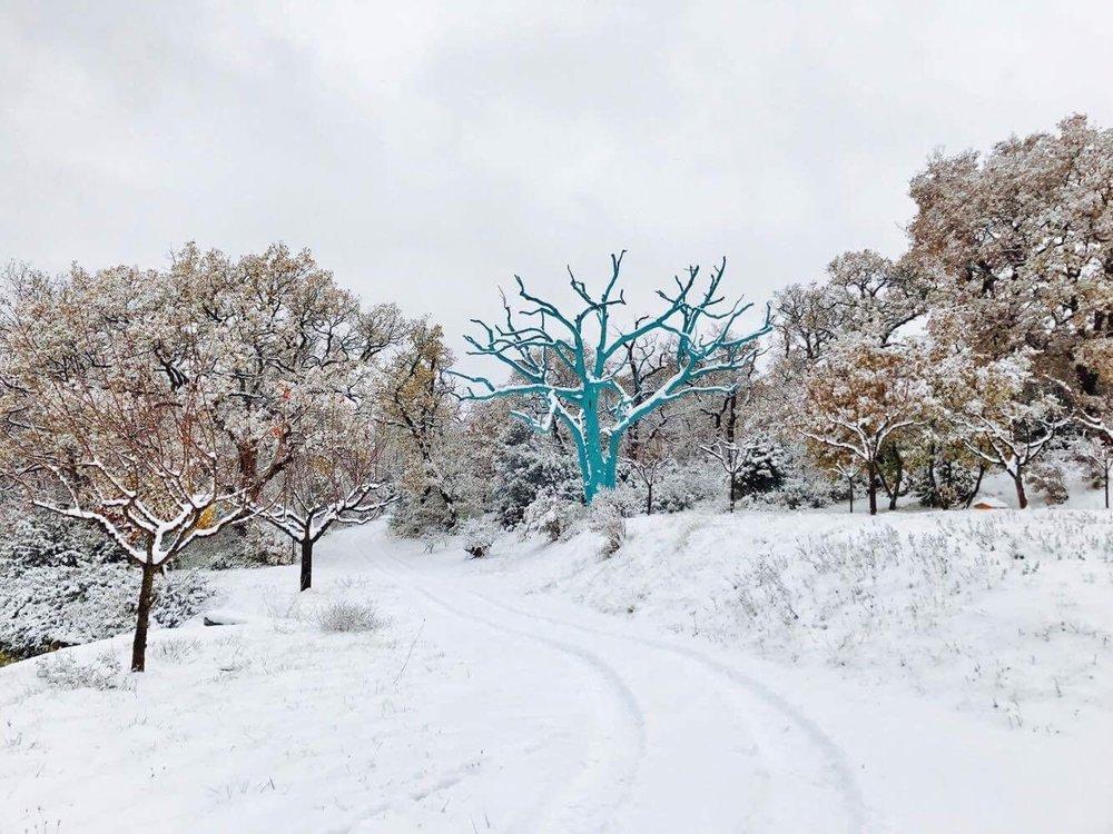 La Verriere Le Chene Bleu in snow