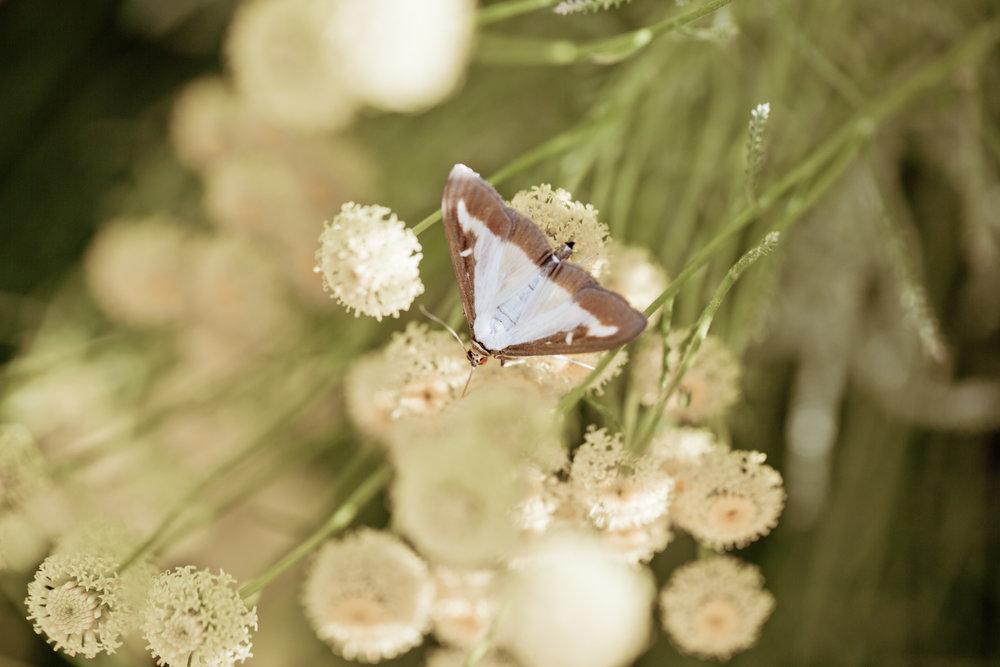 La Verriere butterfly