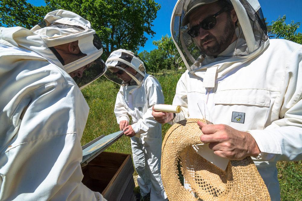 La Verriere bees