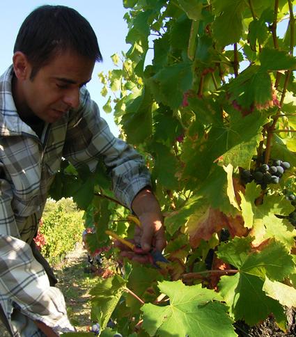 La Verriere Chene Bleu grape cutting