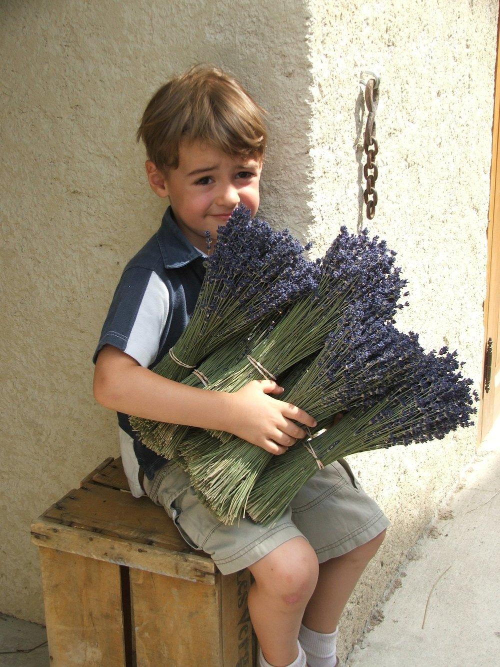 La Verriere Lavender collecting