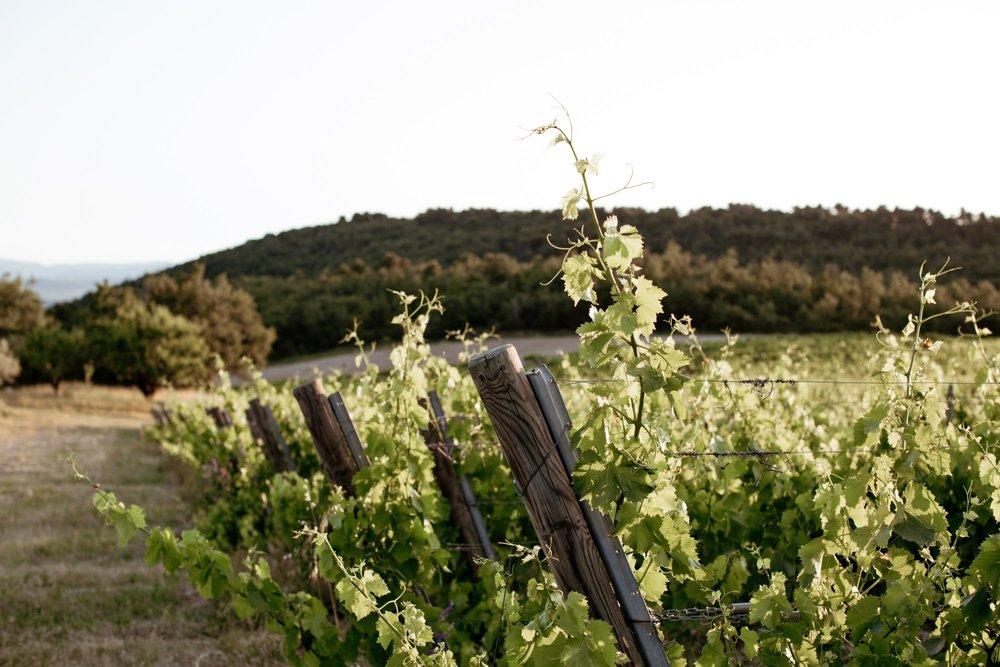 La Verriere vines