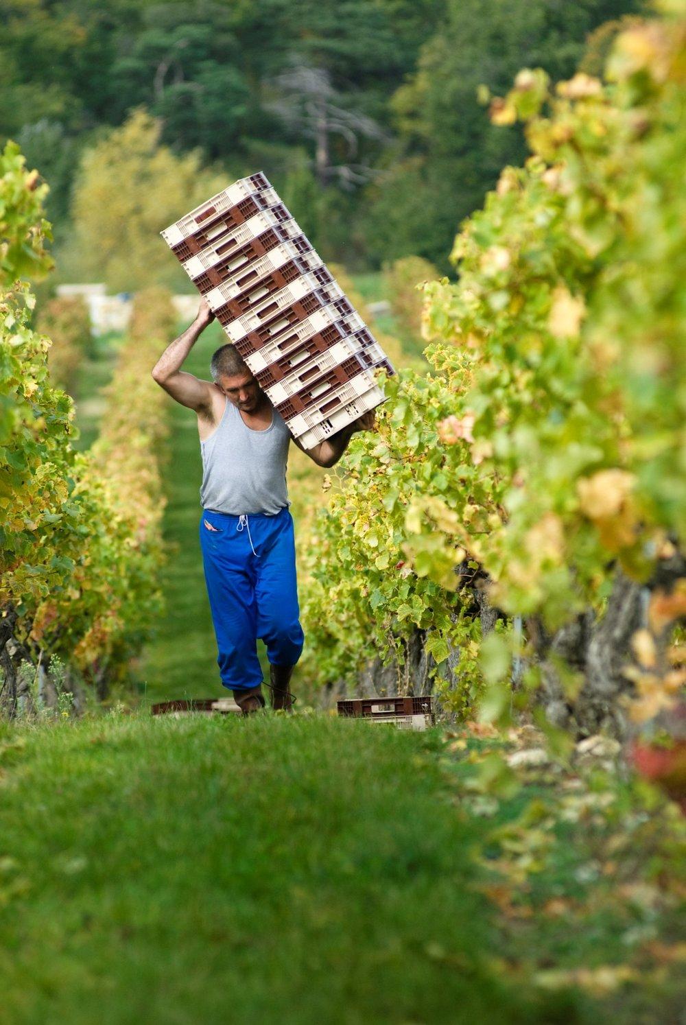 La Verriere wine chene bleu