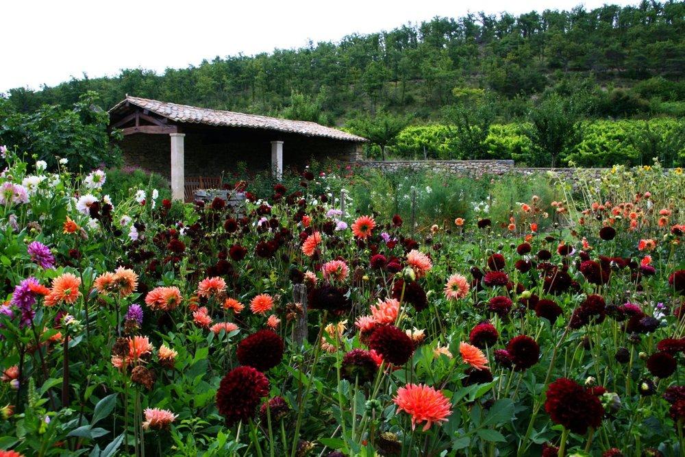 La Verriere flowers