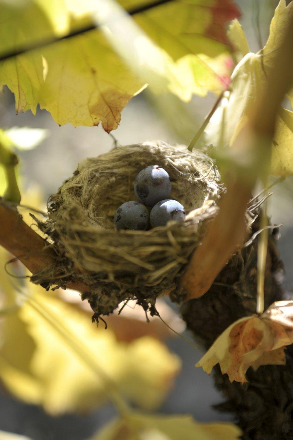 La Verriere birds nest