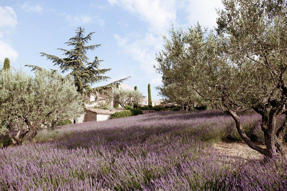 La Verriere lavender