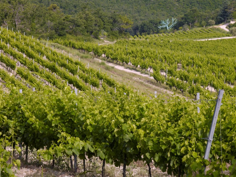 La Verriere vineyard