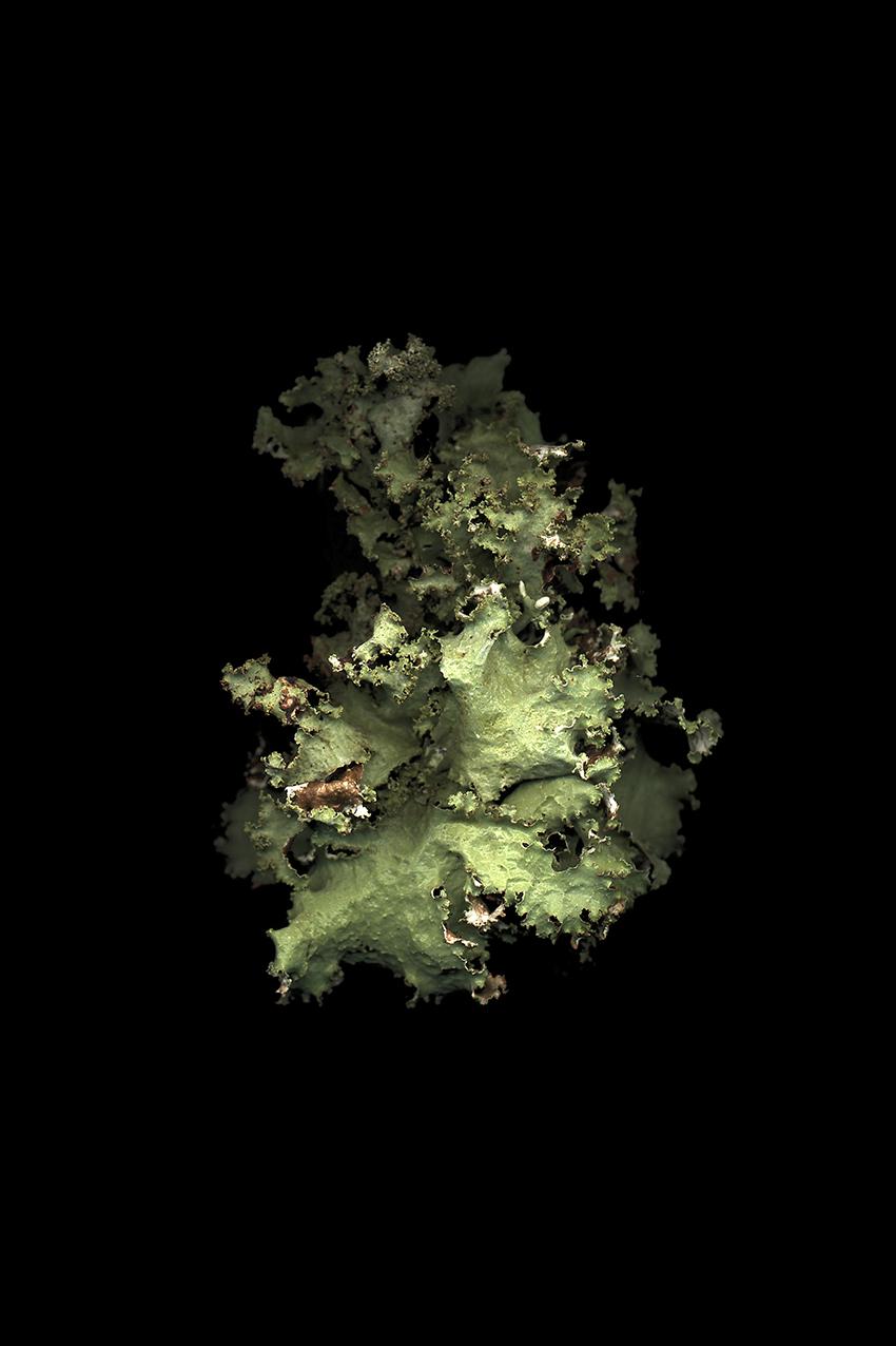120 x 80 cm  Tirage lambda contre-collé sur dibond  Images réalisées de 1998 à nos jours  Lichens collectés dans divers environnements