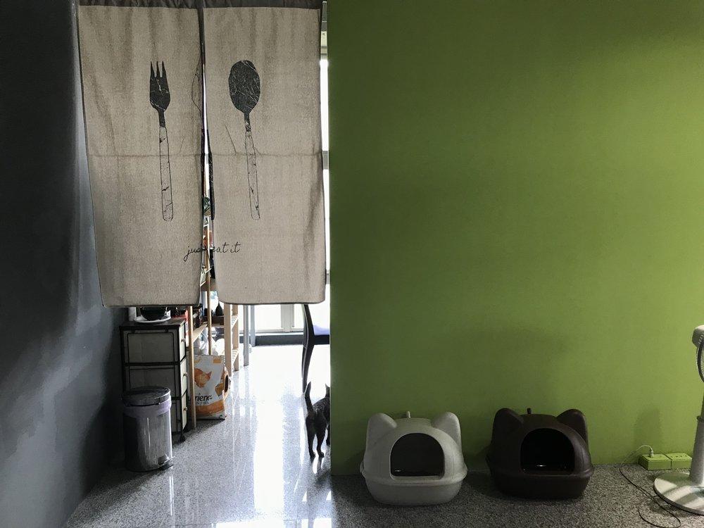 熱愛生活的辦公氣氛 - 專業手沖咖啡組和單品咖啡豆小廚房有電陶爐、大冰箱、微波爐等流行一起煮飯、一起帶便當隨時都有免費飲料零食供紓壓兩隻超愛撒嬌貓咪