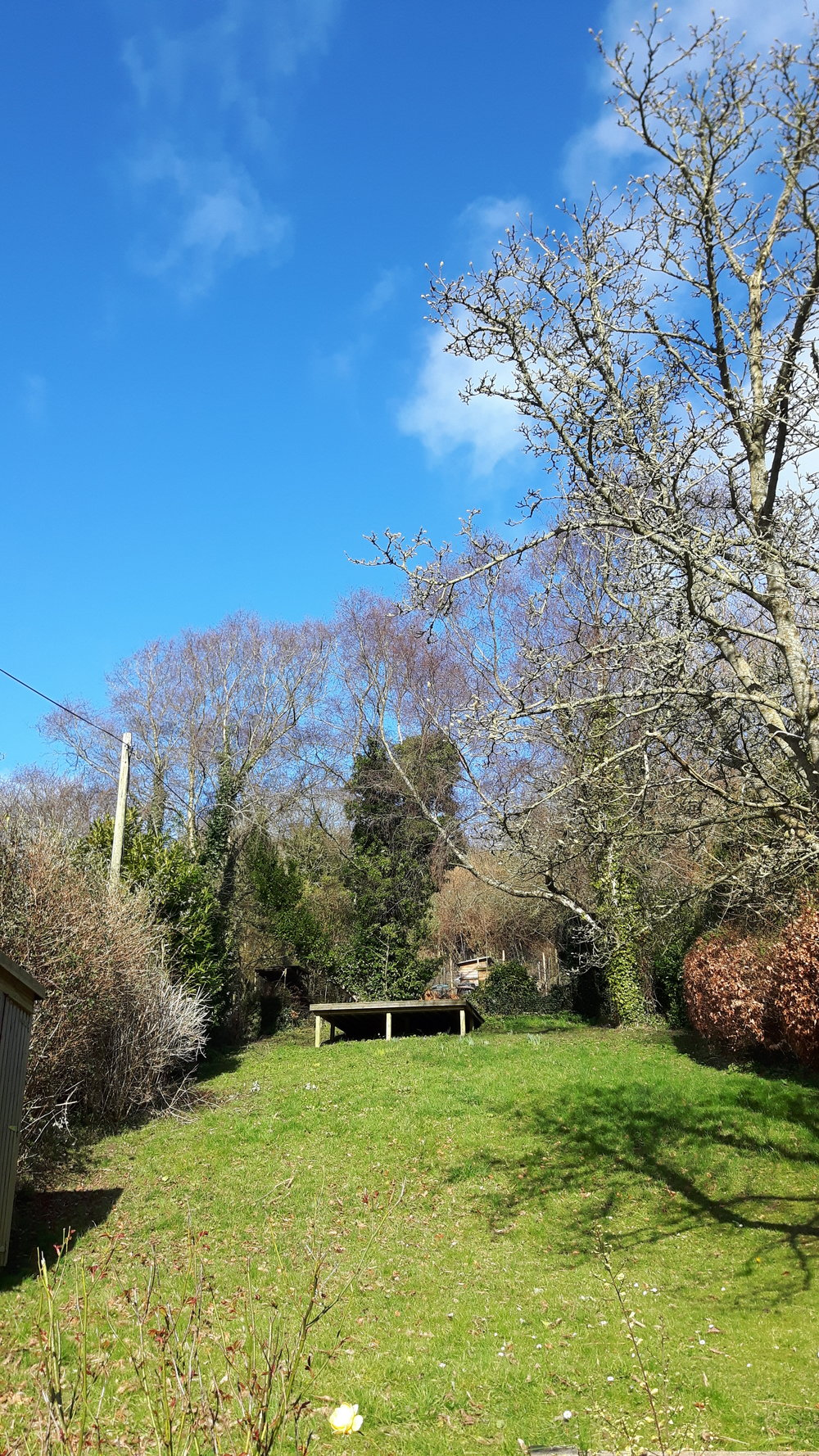 Garden in the cottage in Combe Martin