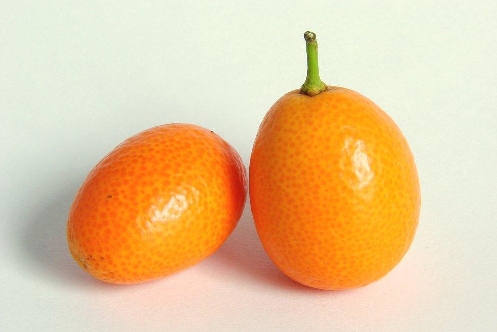 The Kumquat -by Loadmaster.