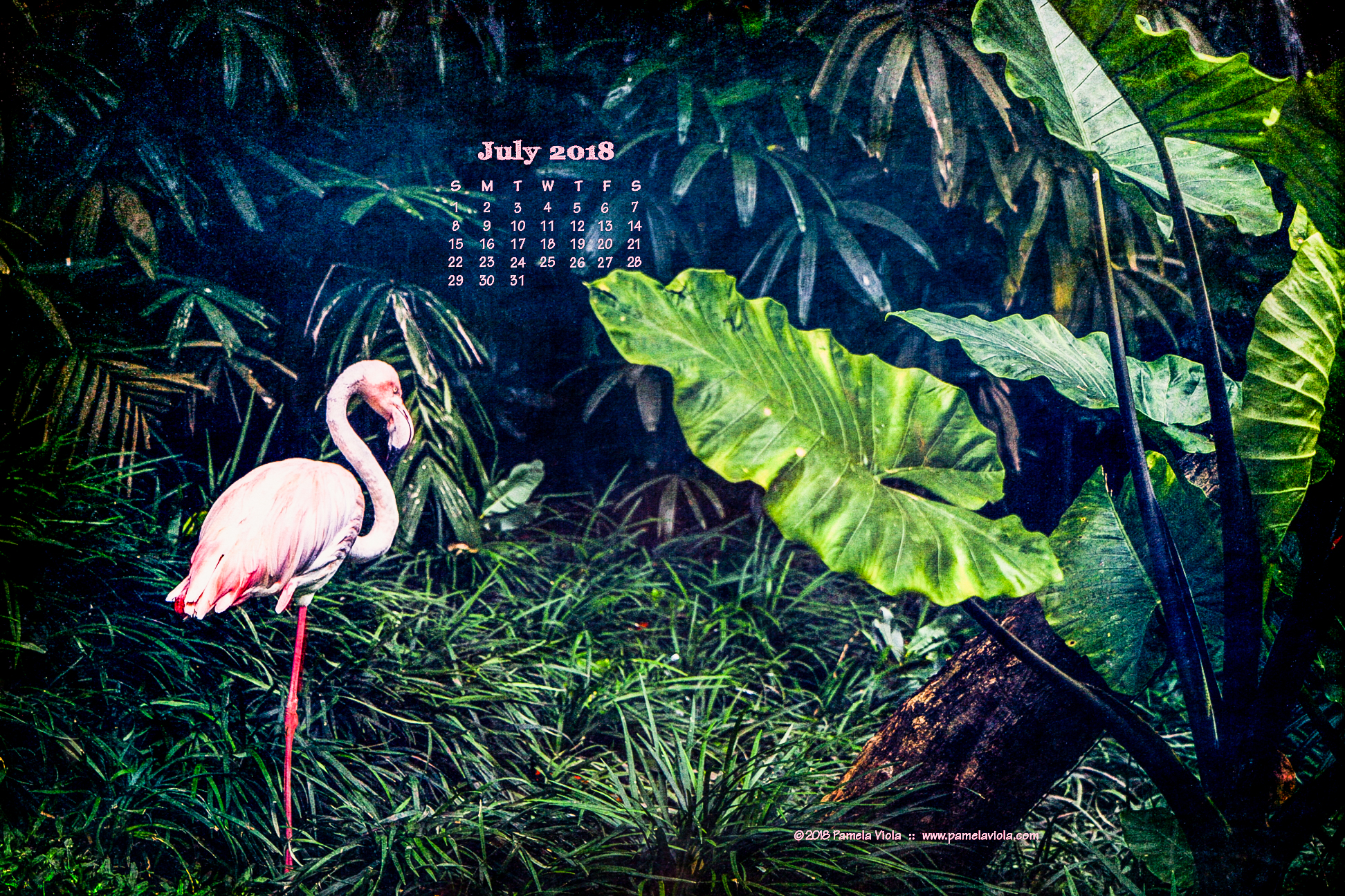 july desktop wallpaper — pamela viola