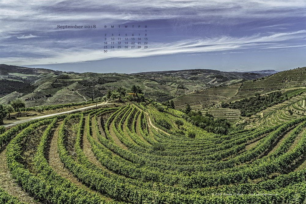 Douro River Valley Vineyards, Portugal