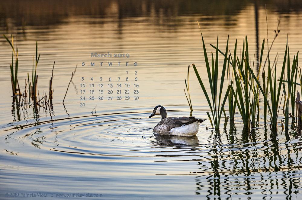 VIOLApamela_MArch2019_calendar.jpg