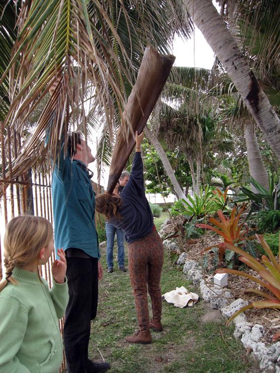 "Shaped Royal Palm sheath with palm fiber, rattan interior armature, thread, resins, oils, 57"" long x 15"" largest diameter.  Listener using trumpet."