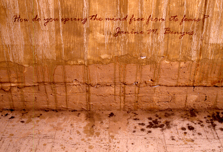 View of walls stained with local pigments and lettered with text from Janine Benyrus,  Biomimicry.