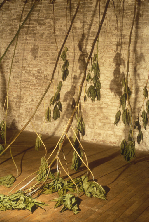 Installation at Chair Building, Kansas City, MO, Detail, wilted castor bean plants, November 1997.