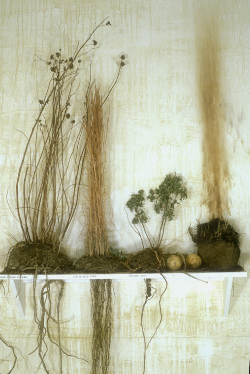 "Detail of prairie plants, above ground and underground, with ""roots"" constructed by the artist using string, glue, natural latex rubber, soil, one sample burned to demonstrate prairie fires still used to control growth."