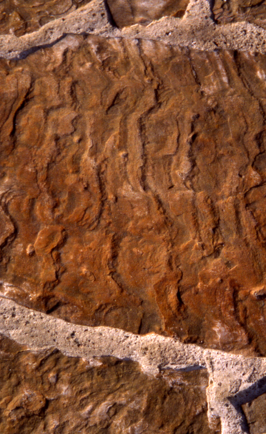 Detail of limestone bearing water marks of the ancient sea that once covered this region.