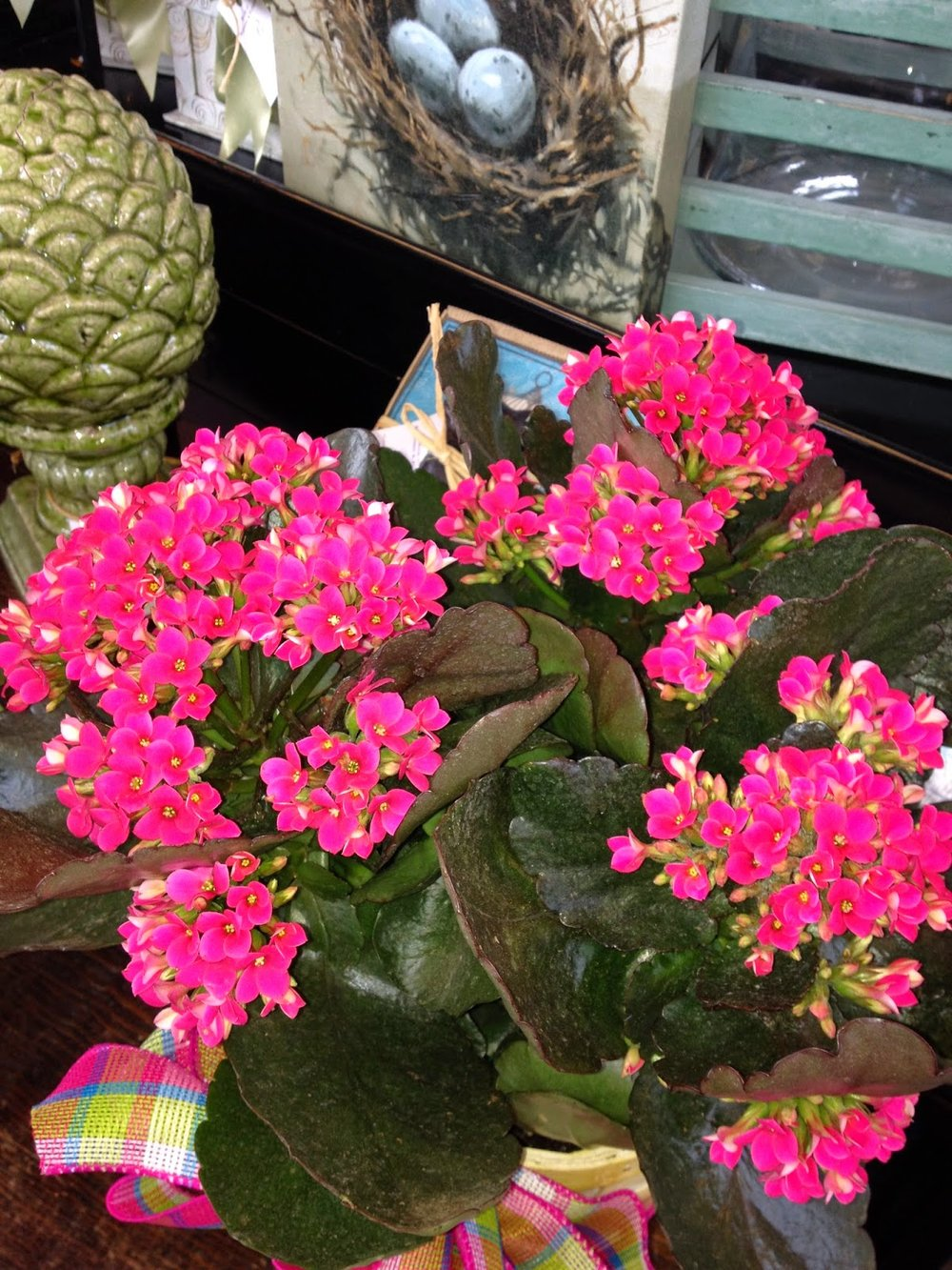 Vibrant Kalanchoes Bank Of Flowers