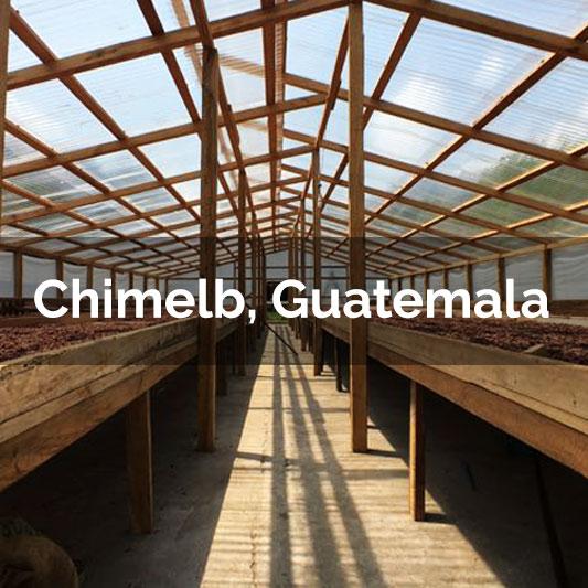 Chimelb, Guatemala - 2017 Harvest
