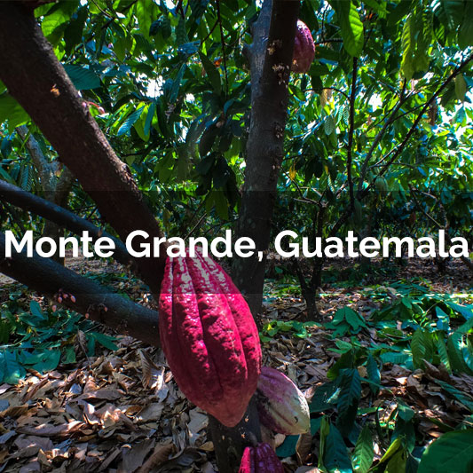 Monte Grande, Guatemala - 2017 Harvest