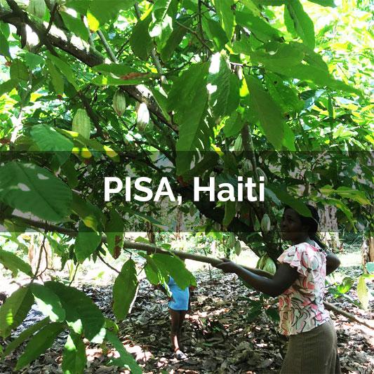 PISA, Haiti - 2017 Harvest