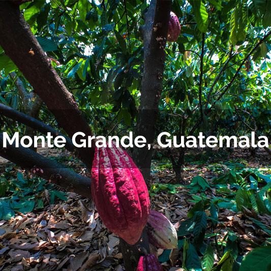 Monte-Grande-tile-Updated.jpg