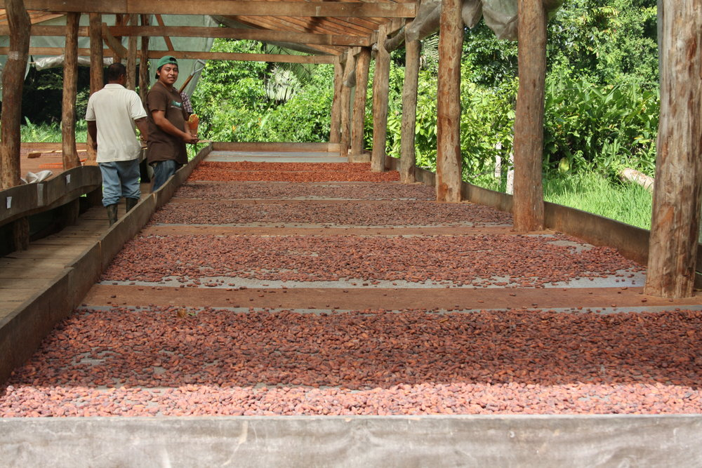 Cacao House Drying.JPG
