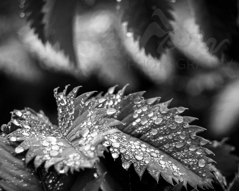 Shine   The beauty of raindrops...sitting like little jewels.