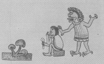 MEXICAN drawing of 16th Century shows three mushrooms, a man eating them and a god behind him, who is speaking through the mushroom.