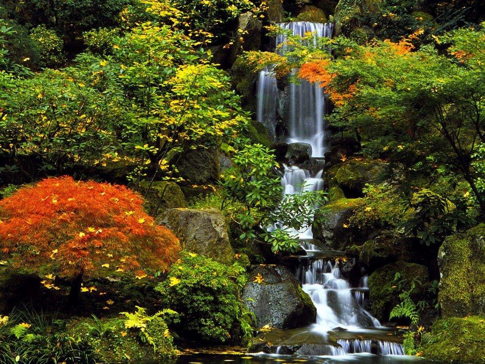 jap garden.jpg