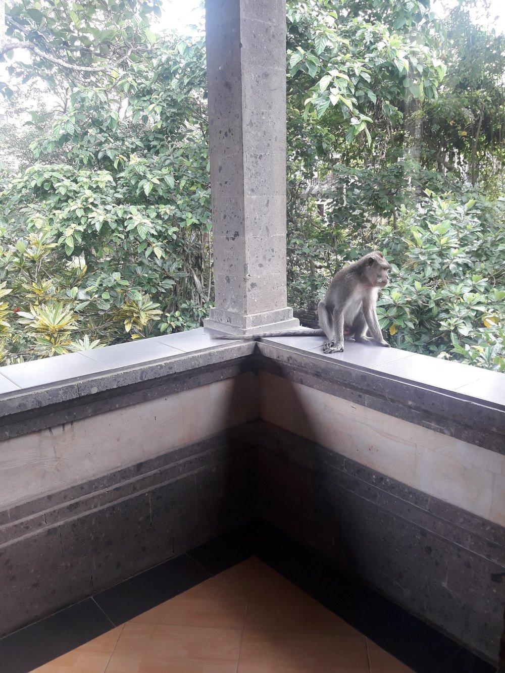 Nosso visitante.