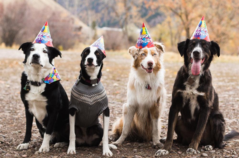 Buddy's Birthday Party