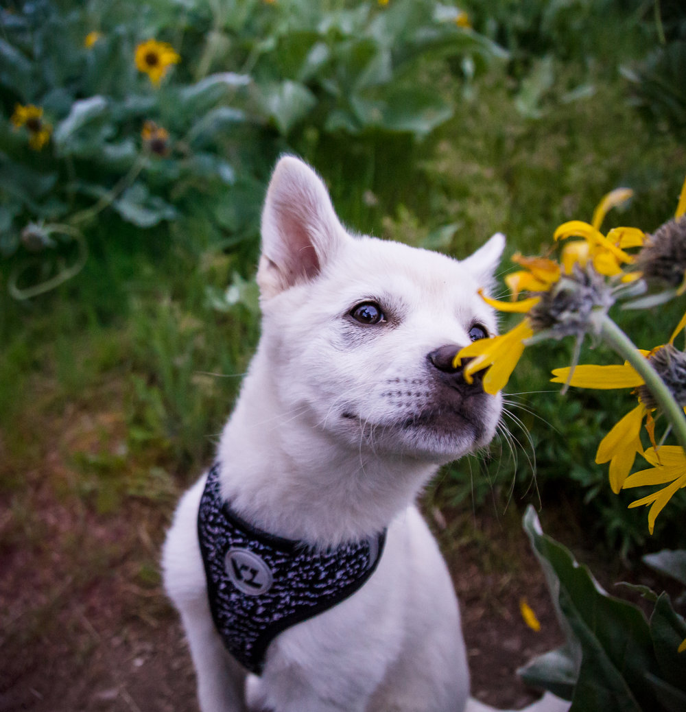 Talulah in the Wildflowers