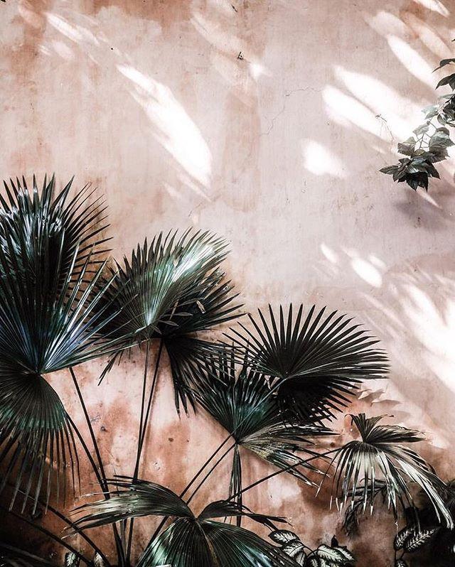 Palms on palms 🌴