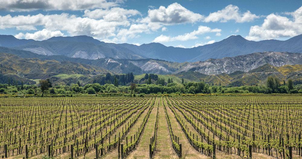 NZ- Gravel & Loam Vineyards.jpg