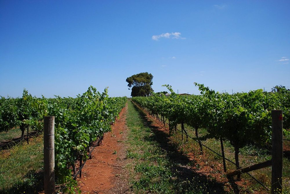 The red soils of Coonawarra