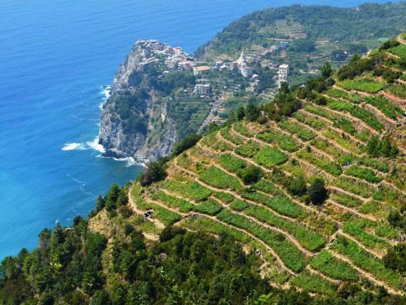 vineyards_5_terre.jpg