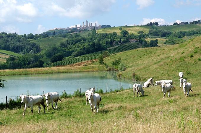 fattoria-poggio-alloro-livestock.jpg