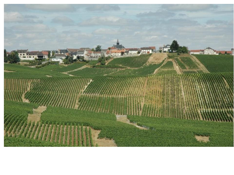 The Grand Cru village of Cramant in the Cote des Blancs
