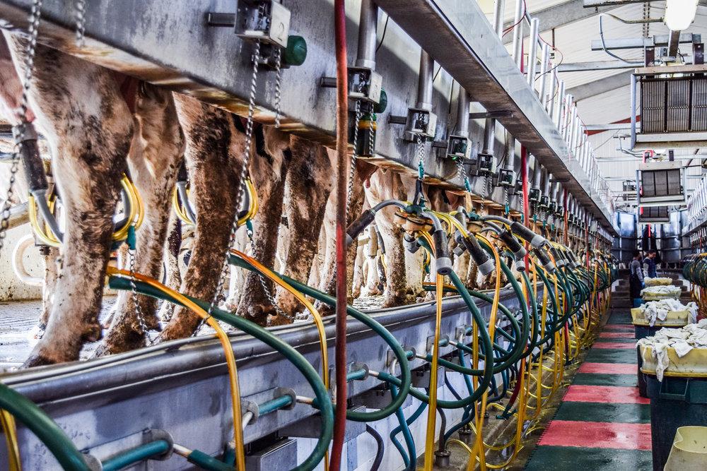 Programa Dairy U - Dairy U es una oportunidad educativa de tres dias creada con la intención de desarrollar la siguiente generación de líderes de la industria de leche. El verano del 2018 marca el primer año de este programa. Diez estudiantes de todo el país son bienvenidos cada verano. Estudiantes viajarán a Kansas a visitar lecherias y juntarse con líderes y accionistas de la industria. Seminarios incluyen el conocimiento de la industria de la leche, el procesos de la vida de una vaca, salud de animal, reproducción, sistemas de ordeño y nutrición. Estudiantes también recibirán información financiera y entrenamiento sobre comunicación.