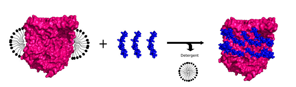 peptidisc reconstitution RC.jpg