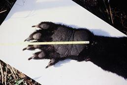 oh wait! its a bear claw