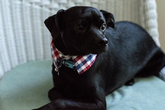 diy-dog-collar-tutorial.jpg