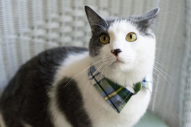 diy-cat-collar.jpg