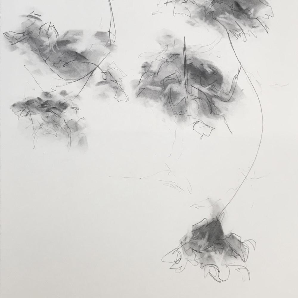 Annie Norbeck Studio -